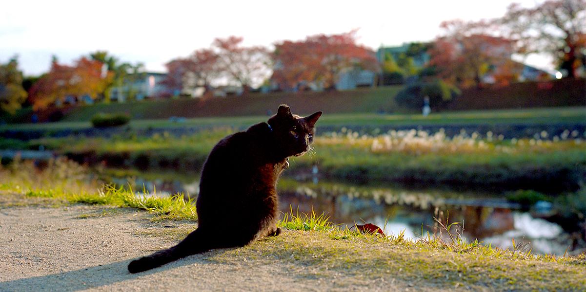 ローライフレックスとカラーネガで撮る京都の紅葉|ROLLEIFLEX 2.8F + KODAK PORTRA 160