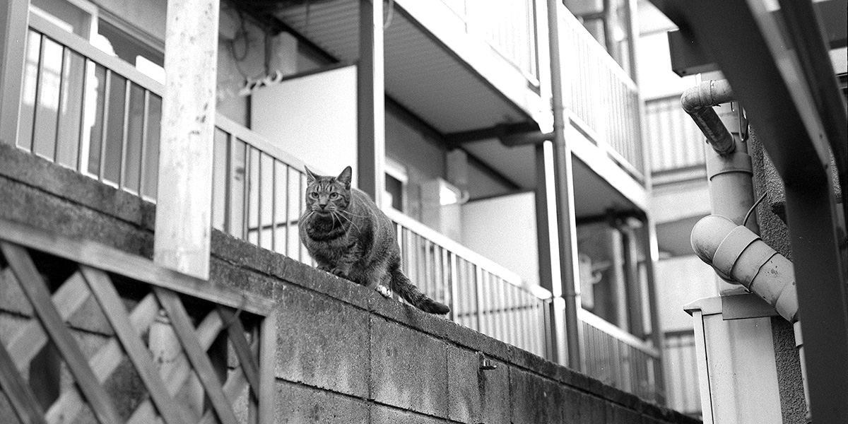ローライフレックス2,8Fで初めての京成立石へ|ROLLEIFLEX 2.8F + フィルム失念