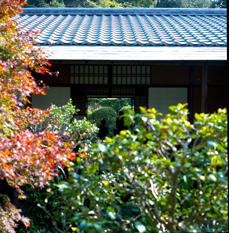 紅葉を眺める|ROLLEIFLEX 2.8F + KODAK PORTRA 160