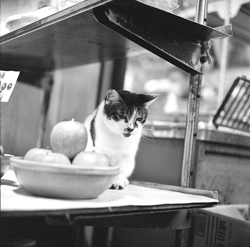 ローライだと猫も警戒心が和らぐ?|ROLLEIFLEX 2.8F + Kodak TRI-X 400