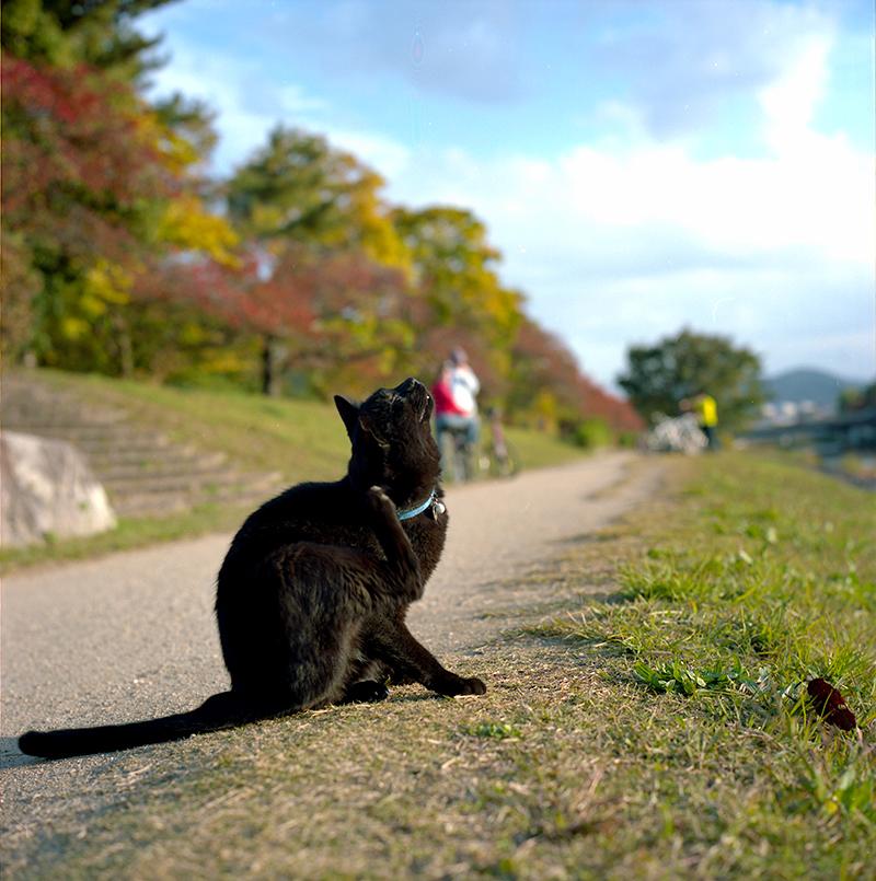 京都の猫に出会う|ROLLEIFLEX 2.8F + KODAK PORTRA 160
