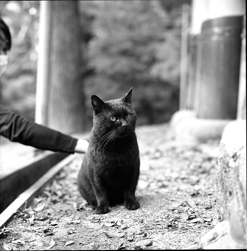 伏見稲荷大社の猫|ROLLEIFLEX 2.8F + Kodak TRI-X 400