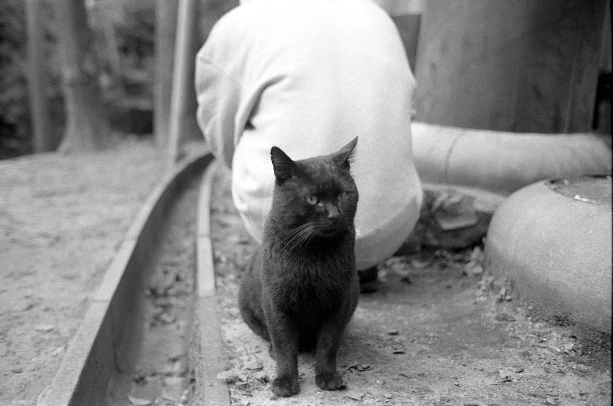 京都の猫 LEICA M5 + SUMMILUX 35mm F1.4 + Kodak TRI-X 400