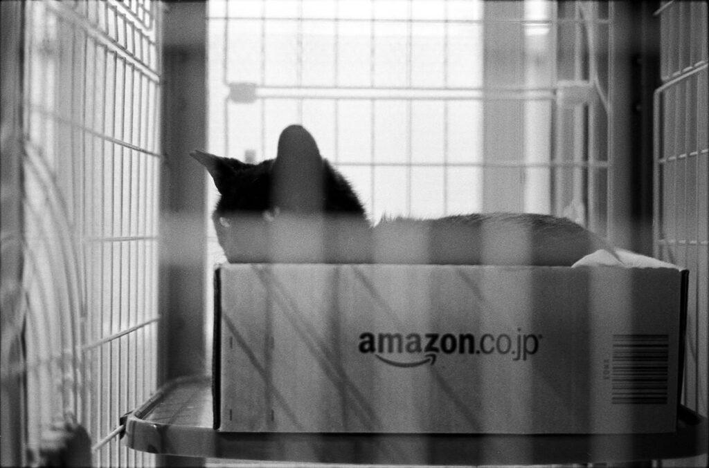 沈黙の黒猫君|Leica M3 + C Sonnar T* 1.5/50 ZM