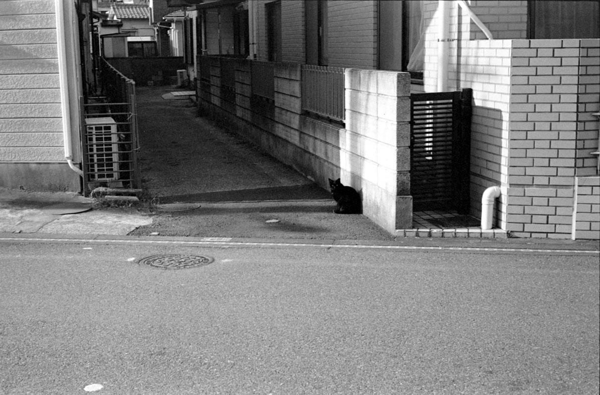 浦安の猫|Leica M3 + C Sonnar T* 1.5/50 ZM + Fujifilm Neopan 400 Presto