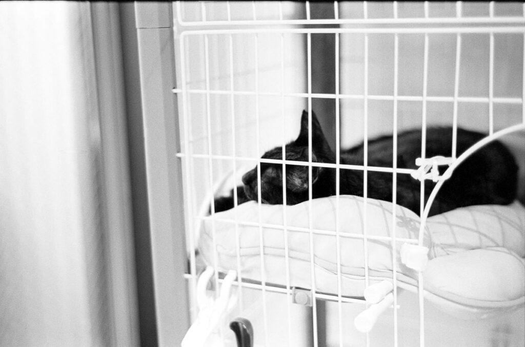 黒猫君は語らない|Leica M3 + C Sonnar T* 1.5/50 ZM