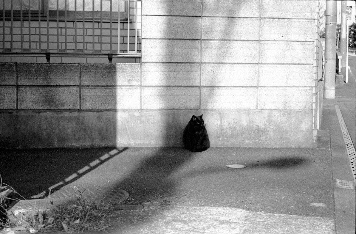 浦安の猫②|Leica M3 + C Sonnar T* 1.5/50 ZM + Fujifilm Neopan 400 Presto
