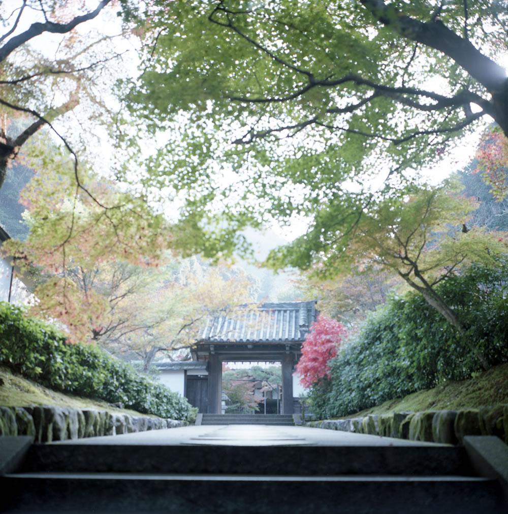 ローライフレックスで撮るお寺の入り口|ROLLEIFLEX 2.8F + KODAK PORTRA 160