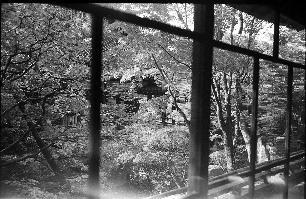永観堂 LEICA M5 + SUMMILUX 35mm F1.4 + Kodak TRI-X 400