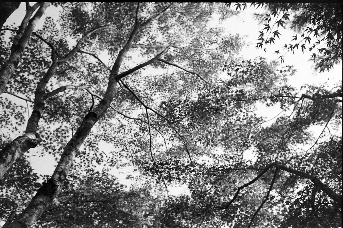 永観堂の紅葉 LEICA M5 + SUMMILUX 35mm F1.4 + Kodak TRI-X 400