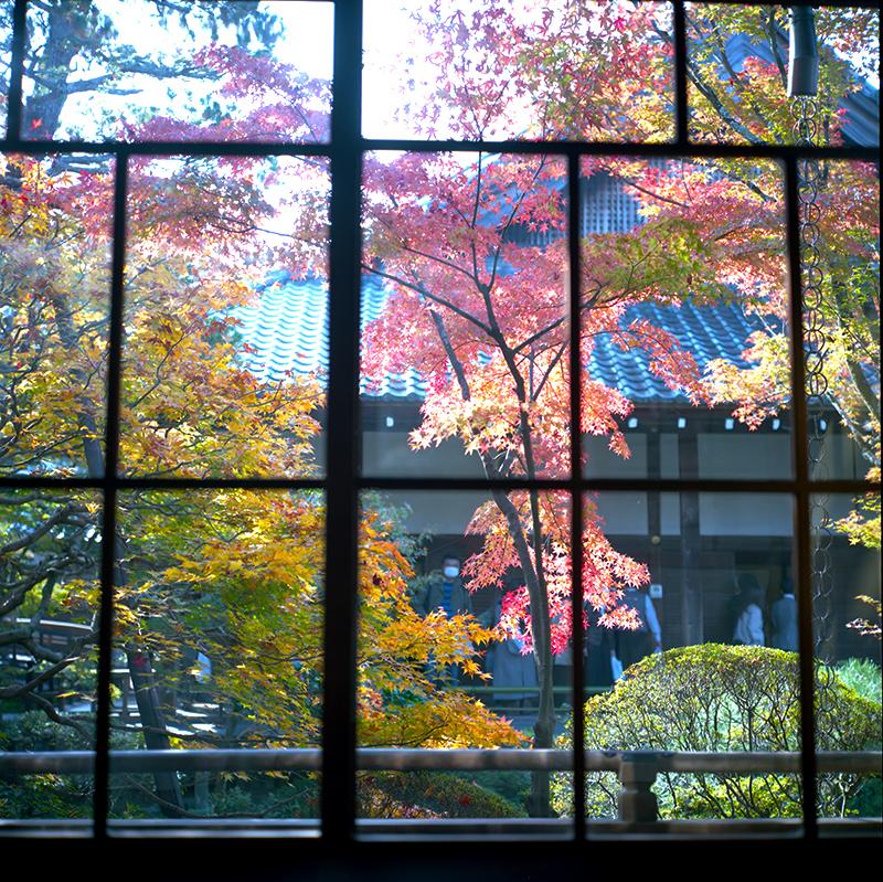 中庭の紅葉を眺める|ROLLEIFLEX 2.8F + KODAK PORTRA 160