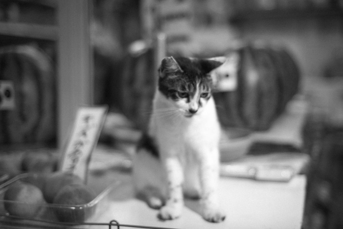 八百屋でネコが売ってる!?|Leica M10 + C Sonnar T* 1.5/50 ZM