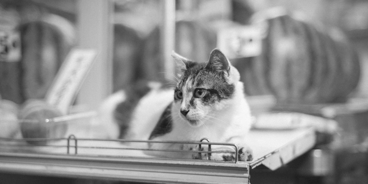 加藤八百屋の看板ネコ|Leica M10 + C Sonnar T* 1.5/50 ZM