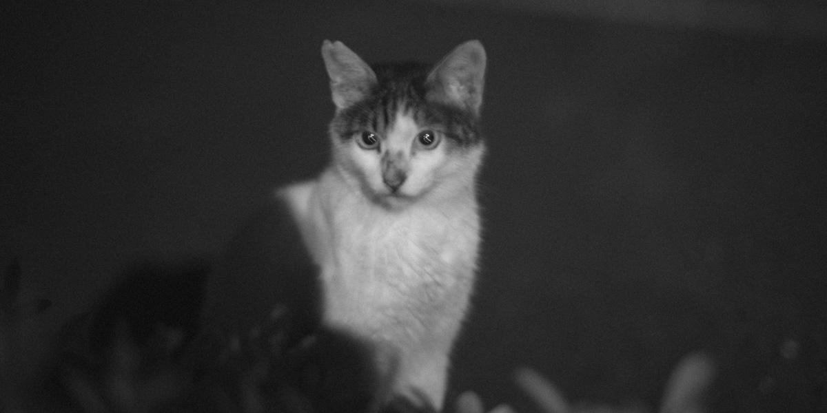 猫写真||Leica M10 + Leica M10 + C Sonnar T* 1.5/50 ZM