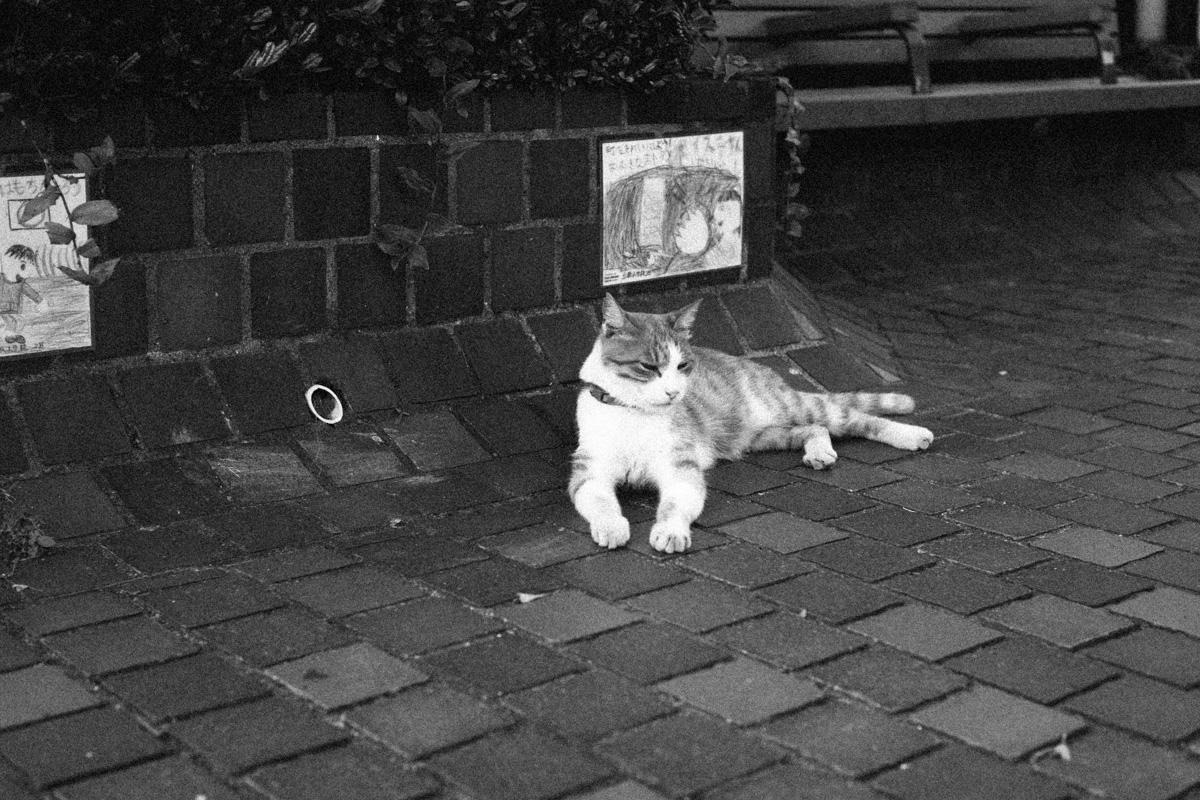 やっぱり猫が好き||Leica M10 + Leica M10 + C Sonnar T* 1.5/50 ZM