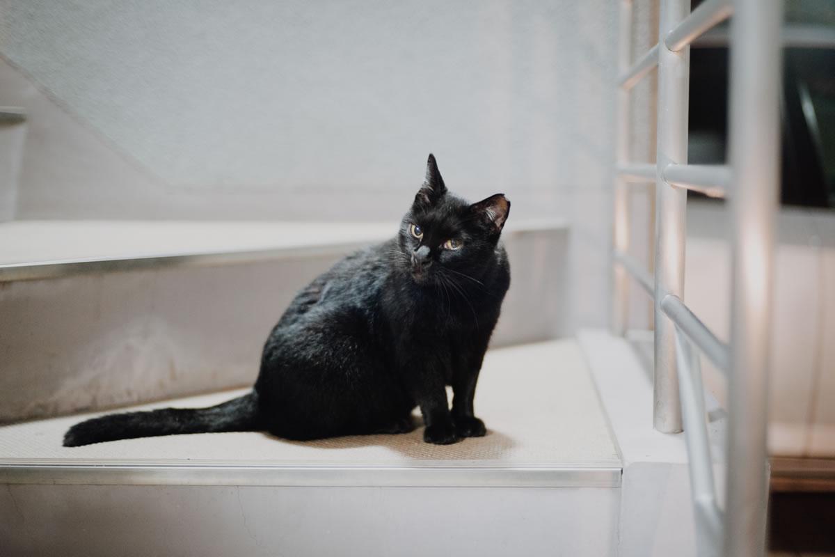 SP-06 – Warm and Moodyで現像した黒猫|Leica M10 + C Sonnar T* 1.5/50 ZM