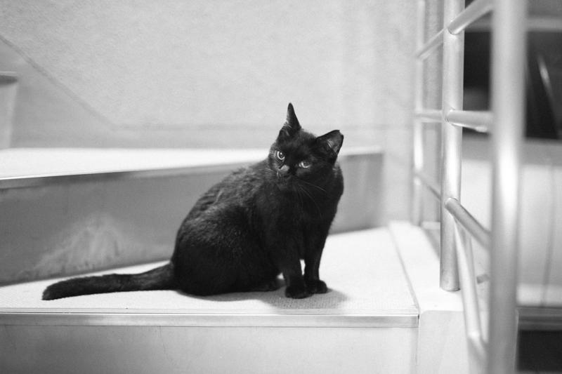 猫を撮る|Leica M10 + C Sonnar T* 1.5/50 ZM