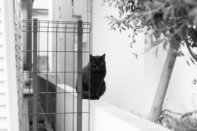 ご近所の猫|Leica M10 + C Sonnar T* 1.5/50 ZM