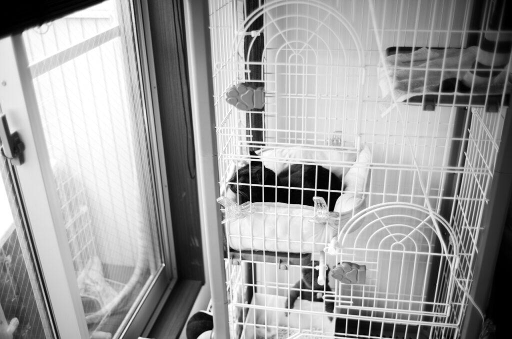 黒猫をお迎えすることになりました Leica M10 Monochrom + Summilux 35mm f1.4