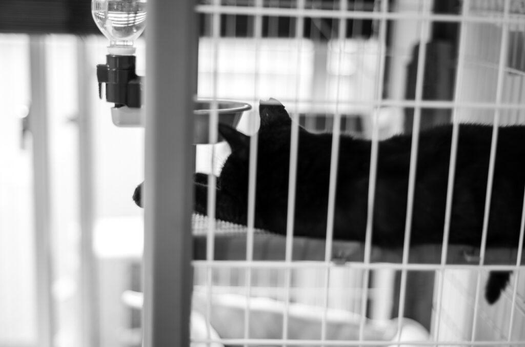 ゾナーで猫を撮るという願いが叶った Leica M10 Monochrom + C Sonnar T* 1.5/50 ZM