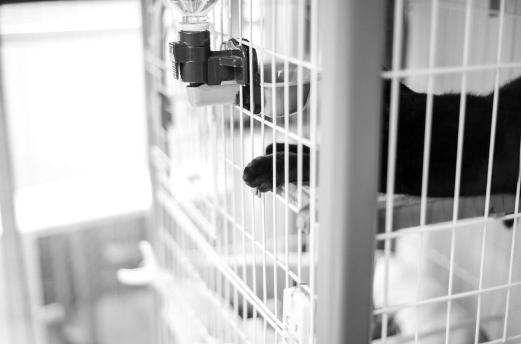 猫写真はフィルムよりデジタルのほうが良さげ Leica M10 Monochrom + C Sonnar T* 1.5/50 ZM