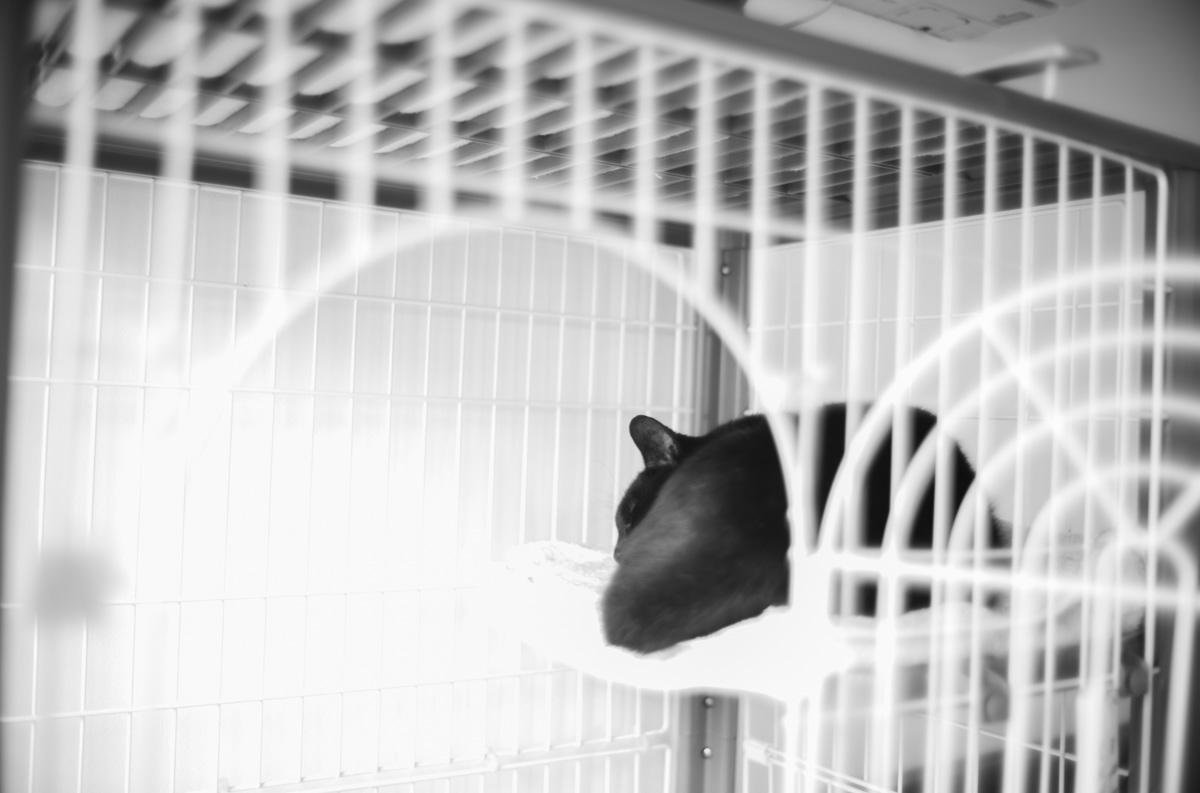 突然ご飯を食べなくなってしまった黒猫氏 Leica M10 Monochrom + Summilux 35mm f1.4