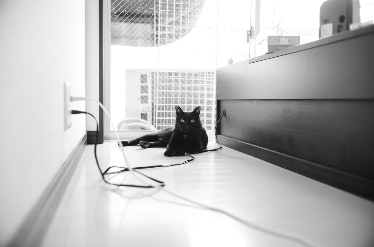 体調が悪く、人から遠ざかる黒猫氏 Leica M10 Monochrom + Summilux 35mm f1.4