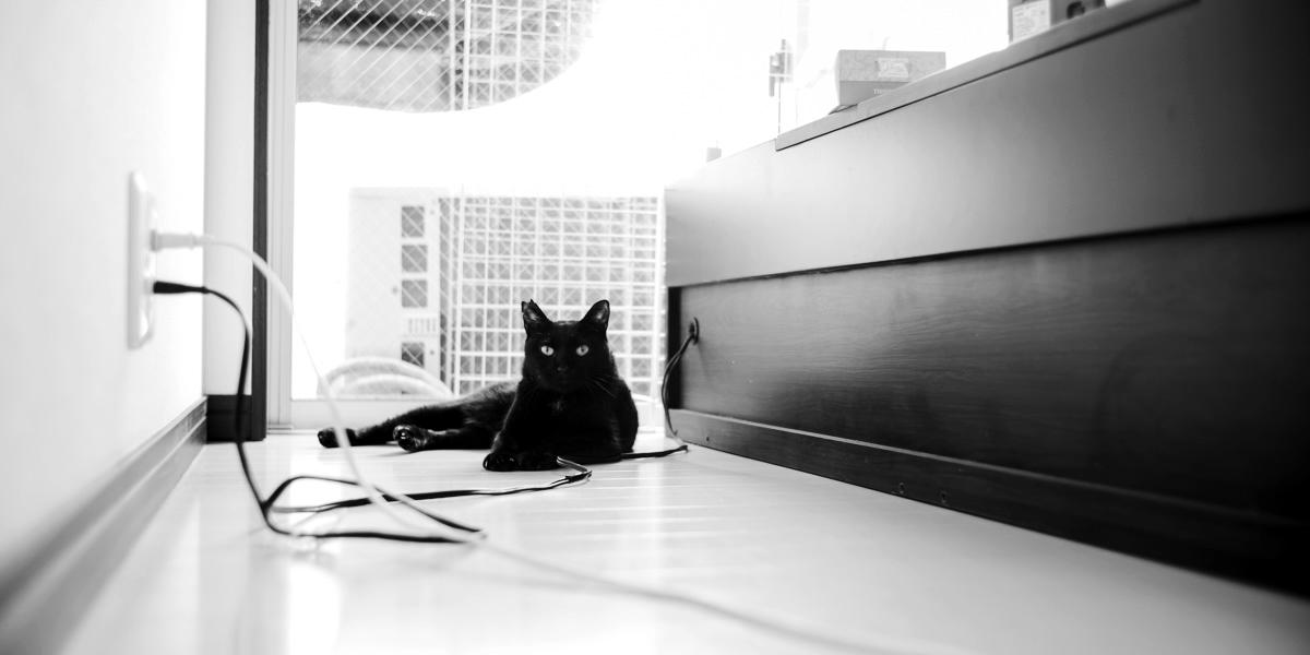 黒猫氏が口内炎になってしまいました Leica M10 Monochrom + Summilux 35mm f1.4