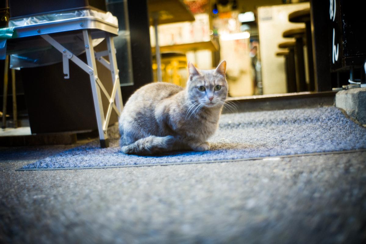 ネコさまもお出迎え|Leica M10 + Summilux 35mm F1.4