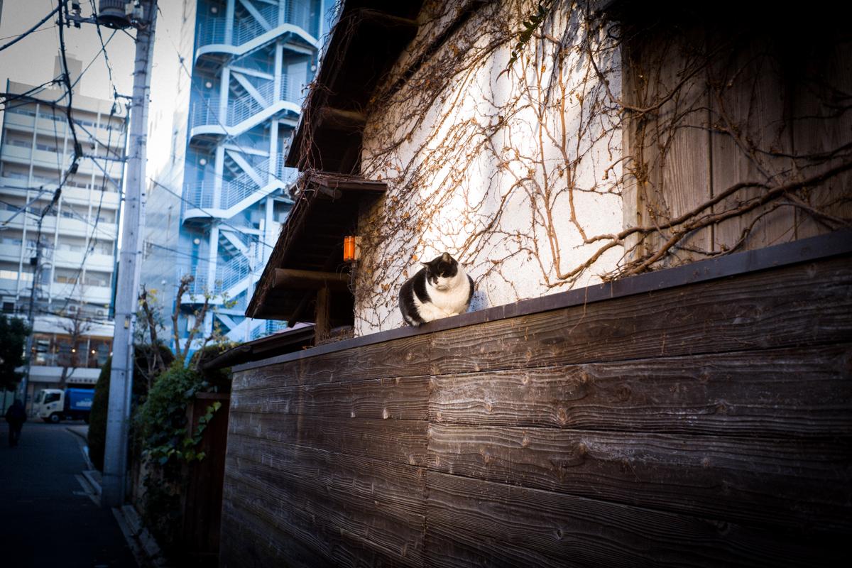 池袋で猫との遭遇|Leica M10 + Summilux 35mm f1.4