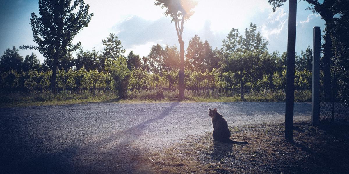 ライカM10でイタリアの猫を撮りに行きました|Leica M10 + Summilux 35mm f1.4