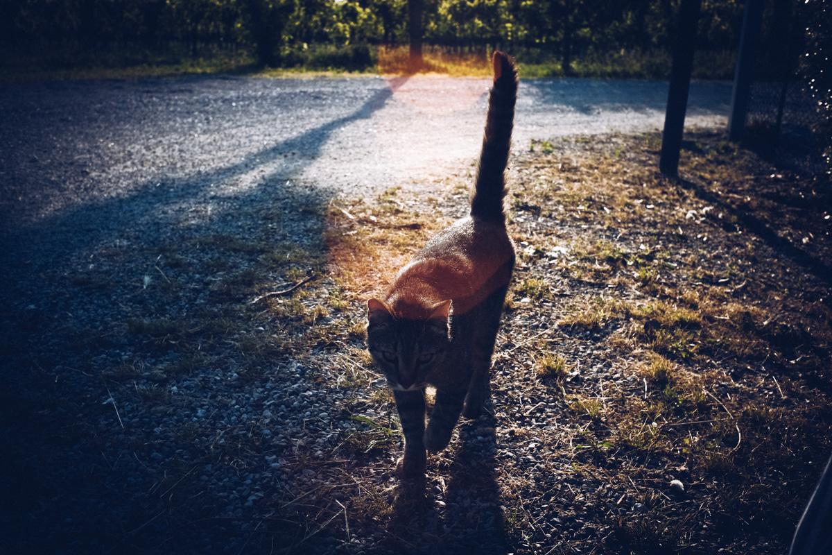 陽気なイタリアの猫|Leica M10 + Summilux 35mm f1.4