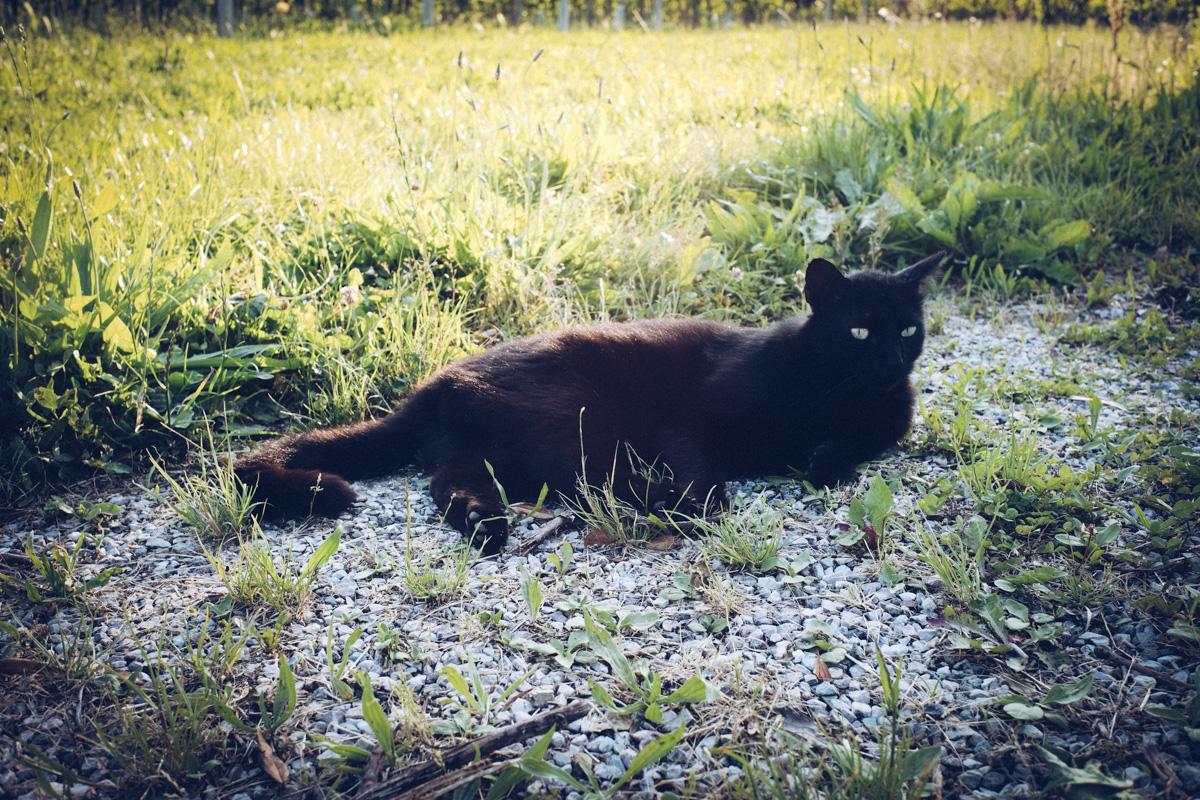 威風堂々なイタリアの猫|Leica M10 + Summilux 35mm f1.4