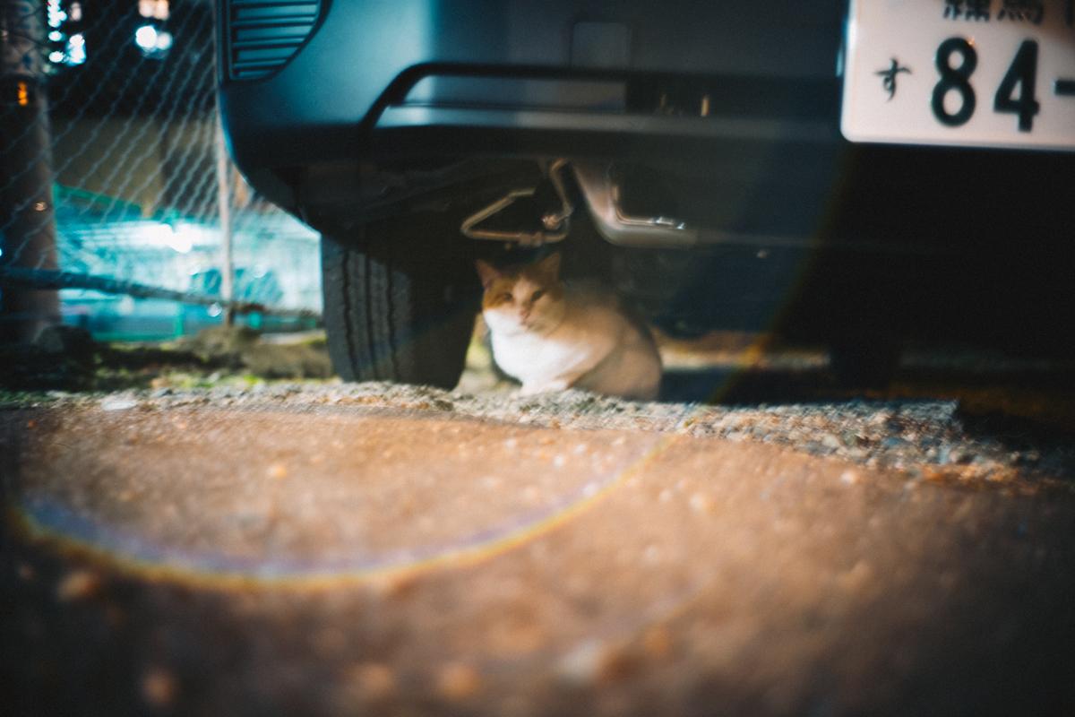ライカでも撮るのは猫|Leica M10 + Summilux 35mm f1.4