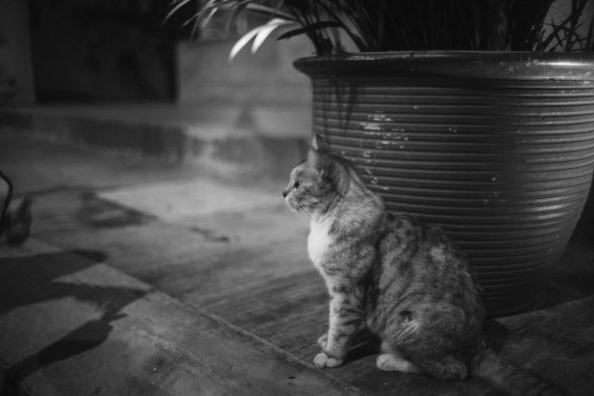 Leica M10で撮影したマレーシアの猫