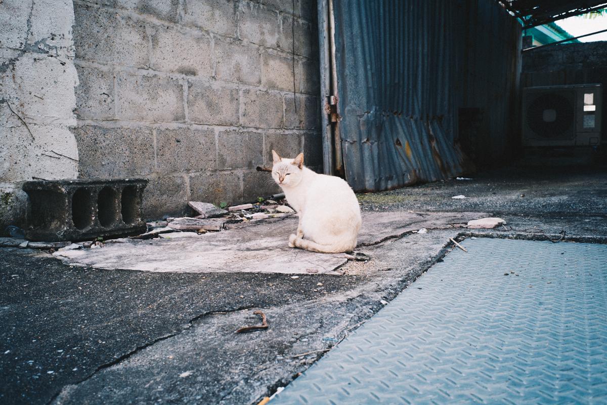 第一名護猫と遭遇!|Leica M10 + Summilux 35mm f1.4