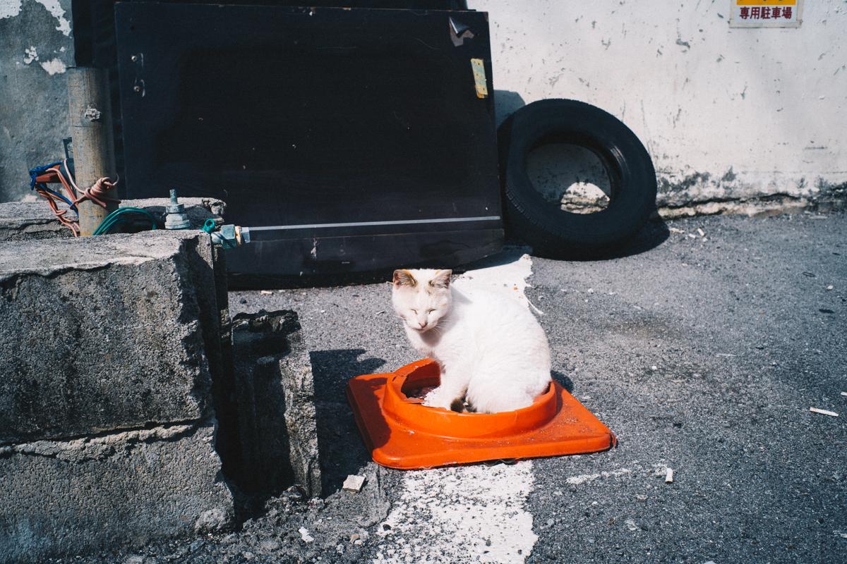 温かい名護の気温で猫もうとうと|Leica M10 + Summilux 35mm f1.4