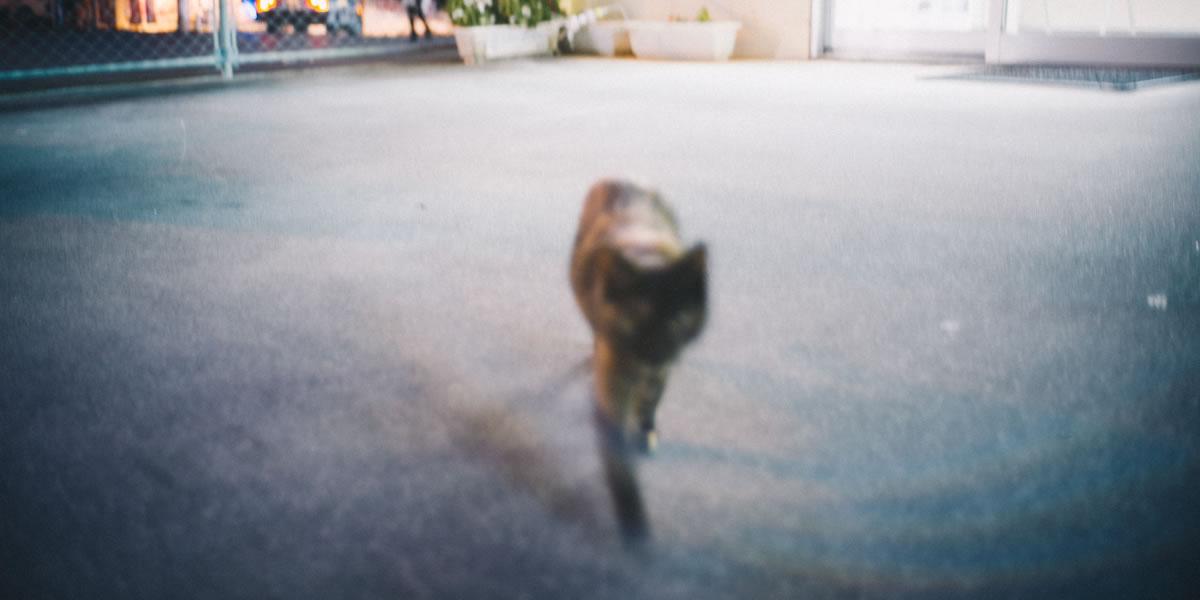 ライカで撮る名護の猫たち|Leica M10 + Summilux 35mm f1.4