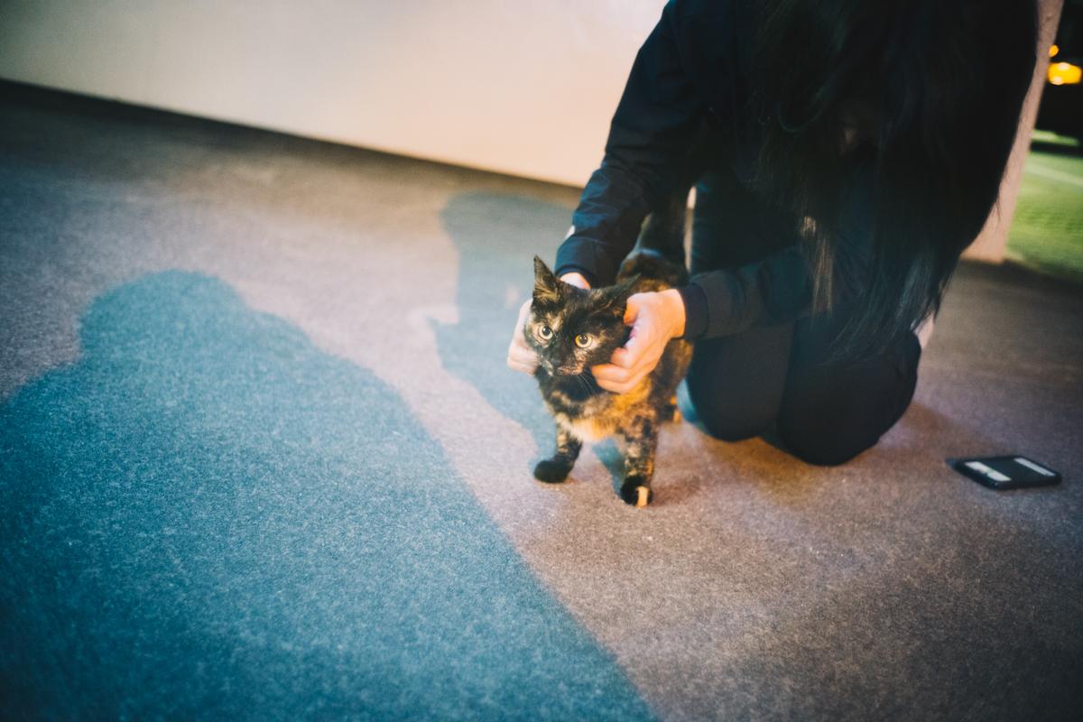 人懐っこいサビ猫と戯れる|Leica M10 + Summilux 35mm f1.4