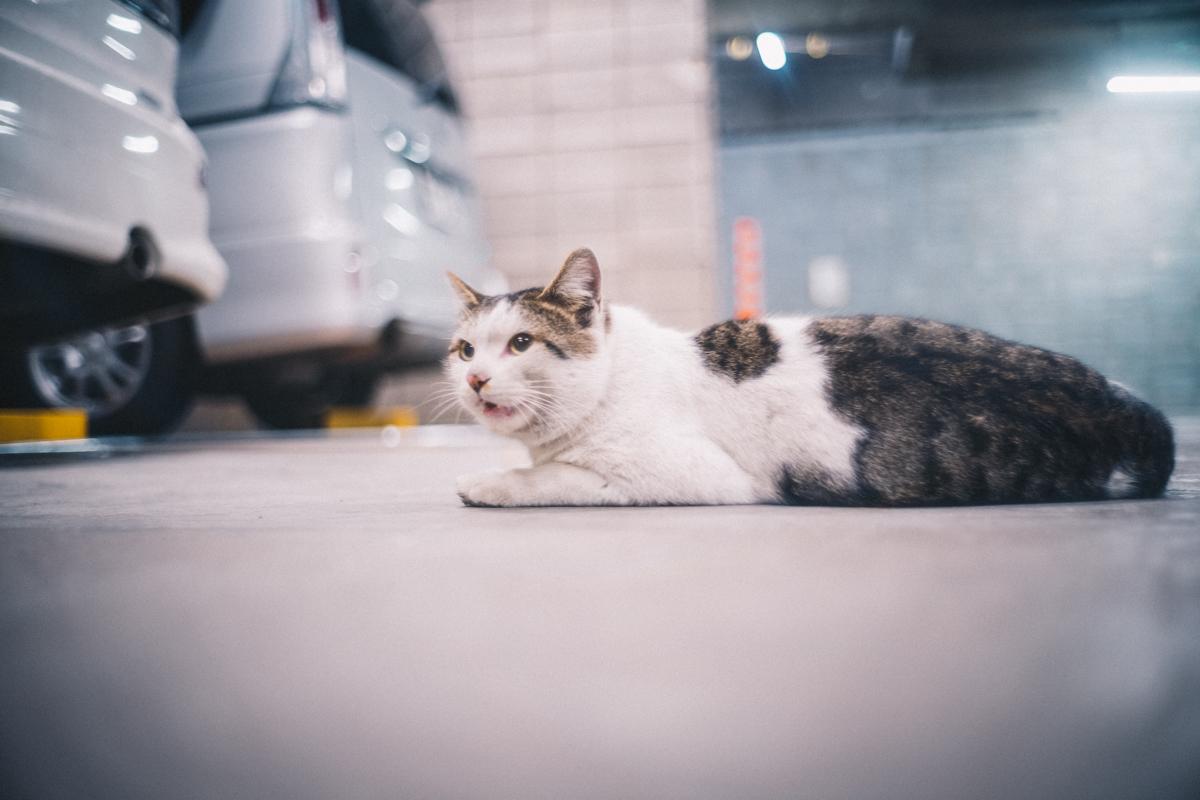 猫にも出会えるなんて、なんて素敵な街なんだ|Leica M10 + Summilux 35mm f1.4