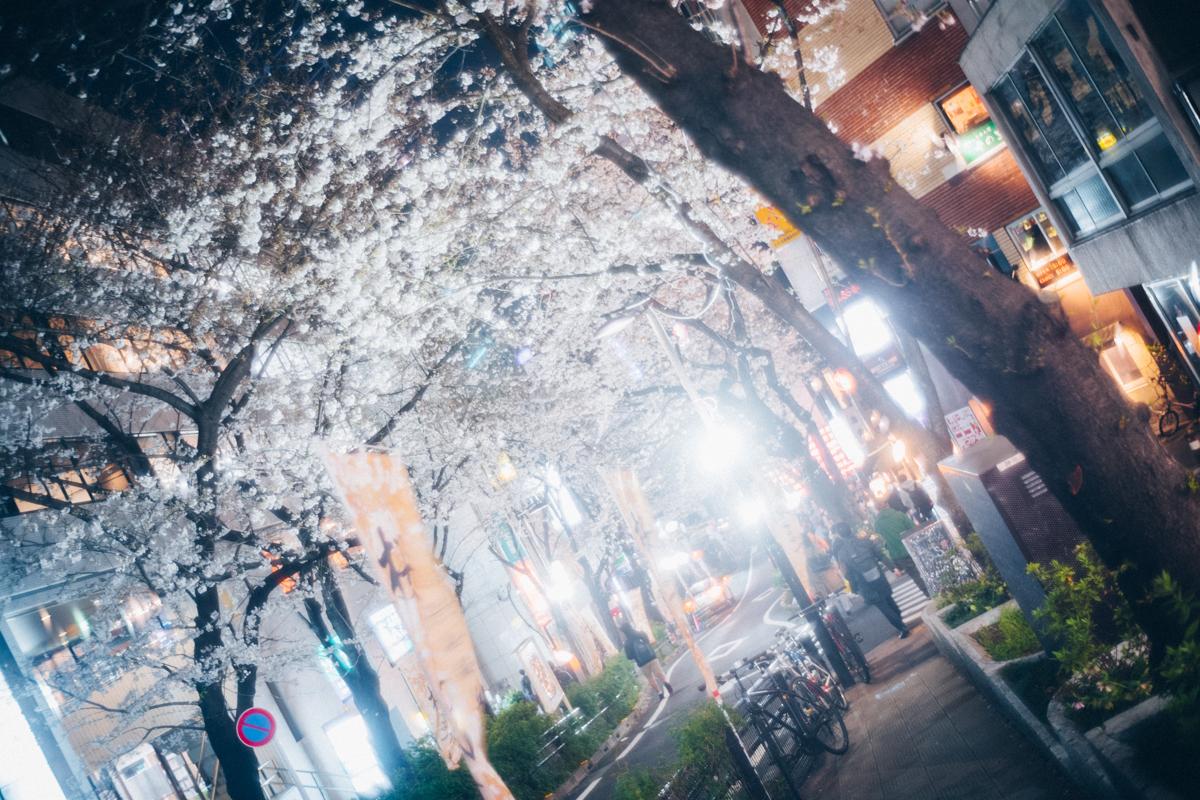 渋谷で静かに桜を楽しむならここ|Leica M10 + Summilux 35mm f1.4