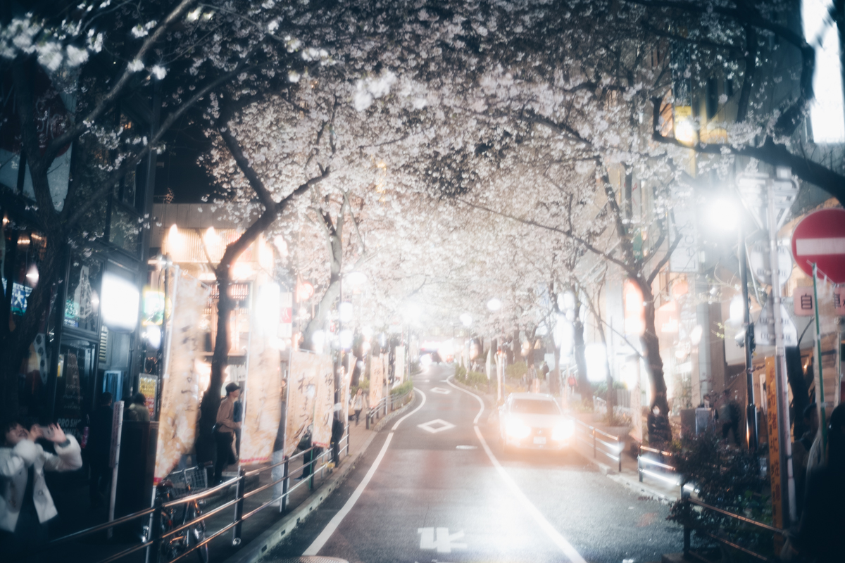 桜丘の桜|Leica M10 + Summilux 35mm f1.4