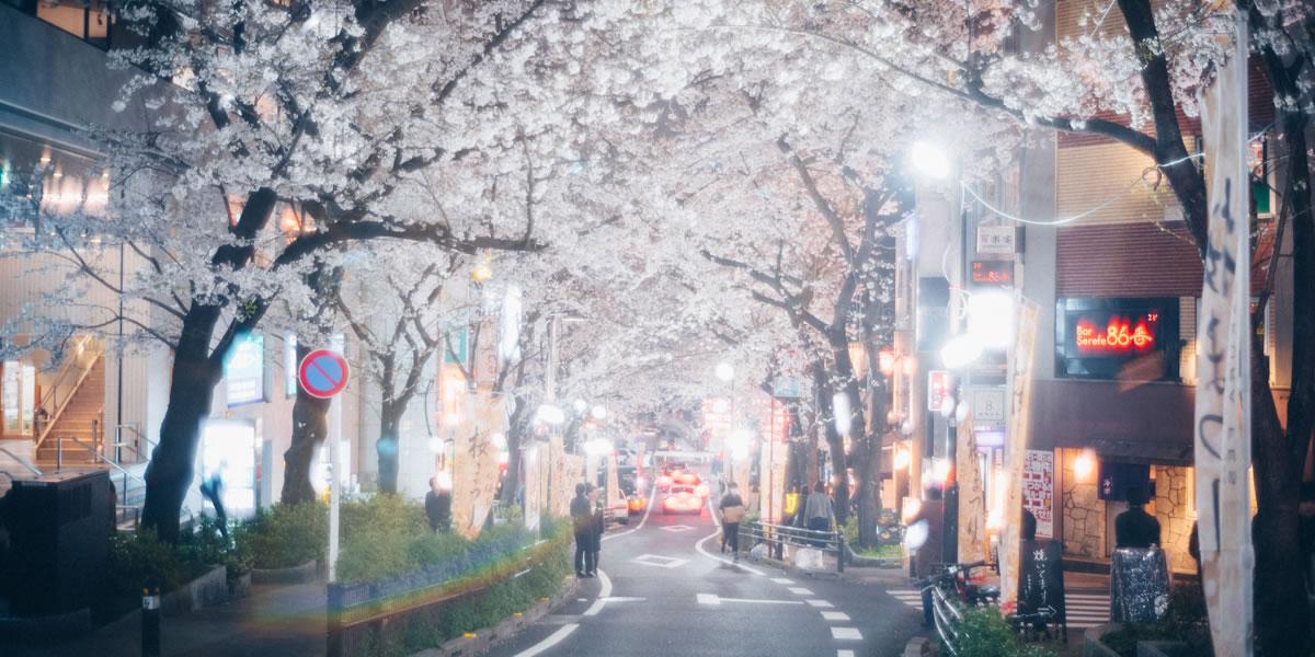 2019年の桜が咲きました|Leica M10 + Summilux 35mm f1.4