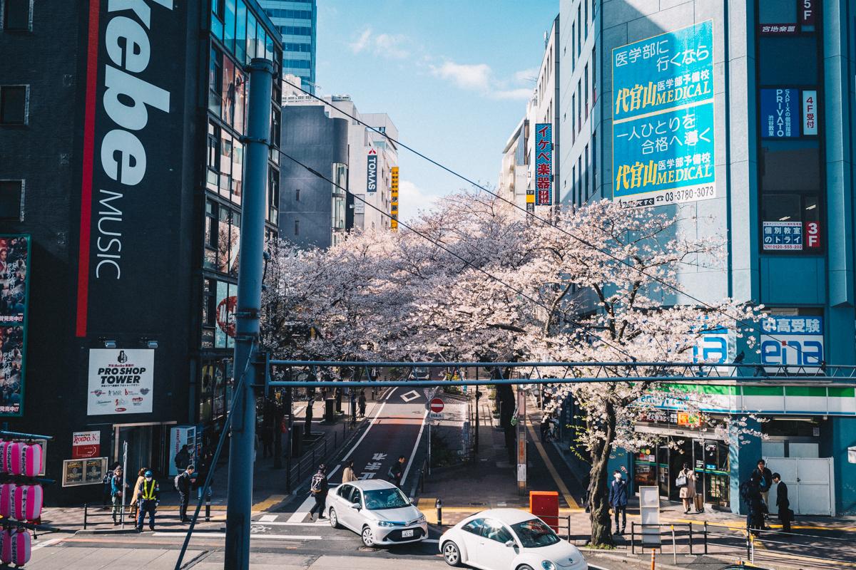 日中の桜丘はこんな感じ|Leica M10 + Summilux 35mm f1.4