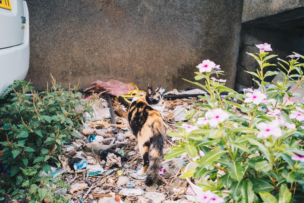 宮古島の猫|Leica M10 + Summilux 35mm f1.4
