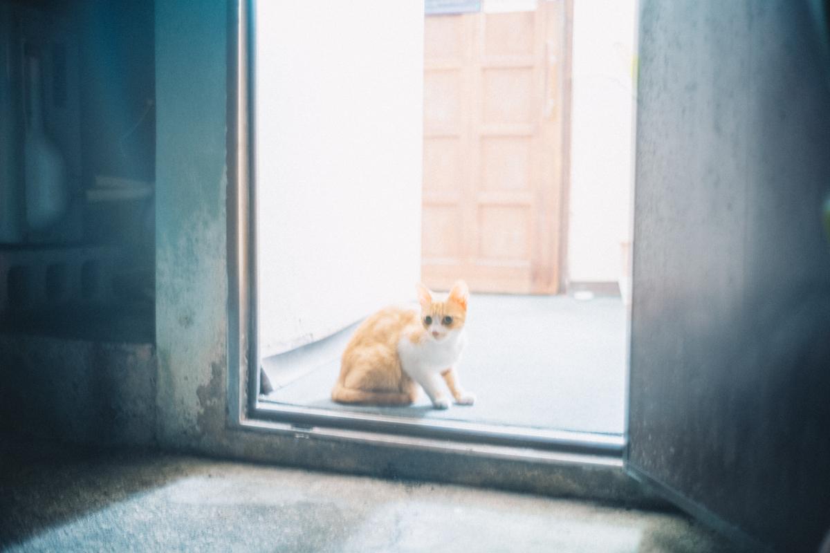 宮古島の猫②|Leica M10 + Summilux 35mm f1.4