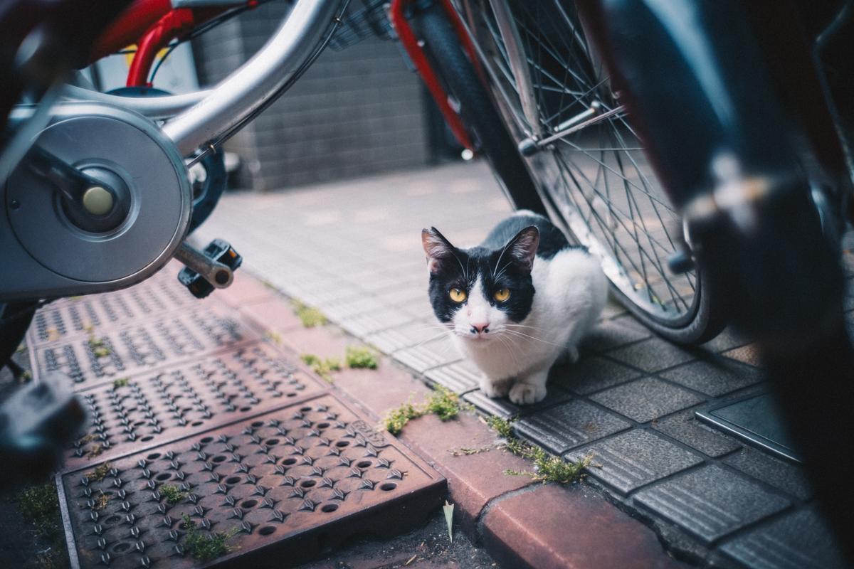 蒲田で出会った猫|Leica M10 + Summilux 35mm f1.4