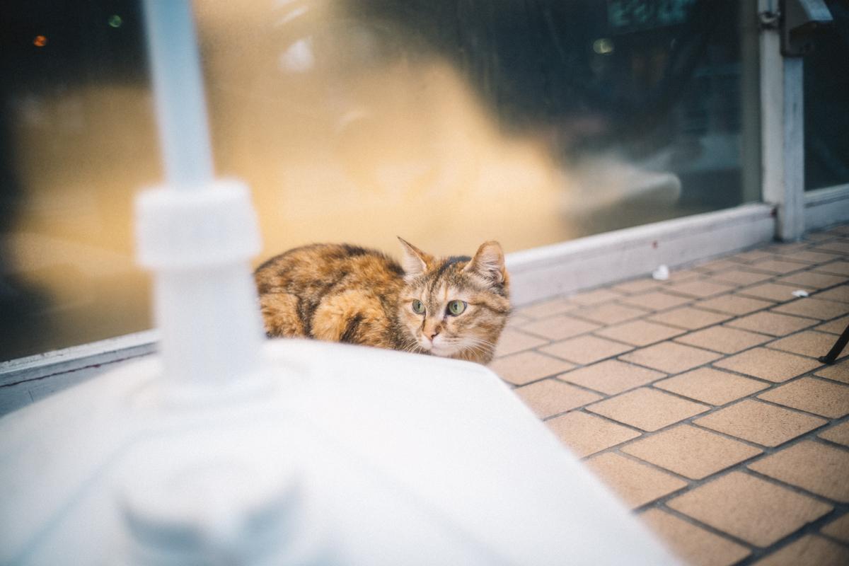 猫に会えたから北池袋は好きになった|Leica M10 + Summilux 35mm f1.4
