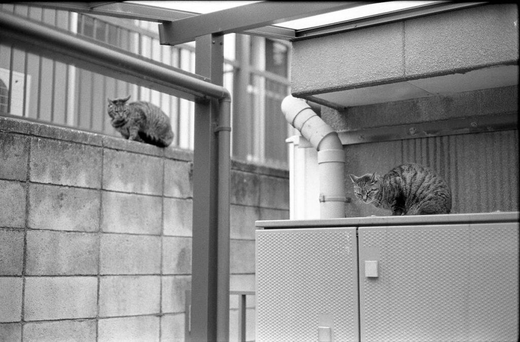 猫のお見送り|Leica M3 + C Sonnar T* 1.5/50 ZM + FKodak TRI-X 400