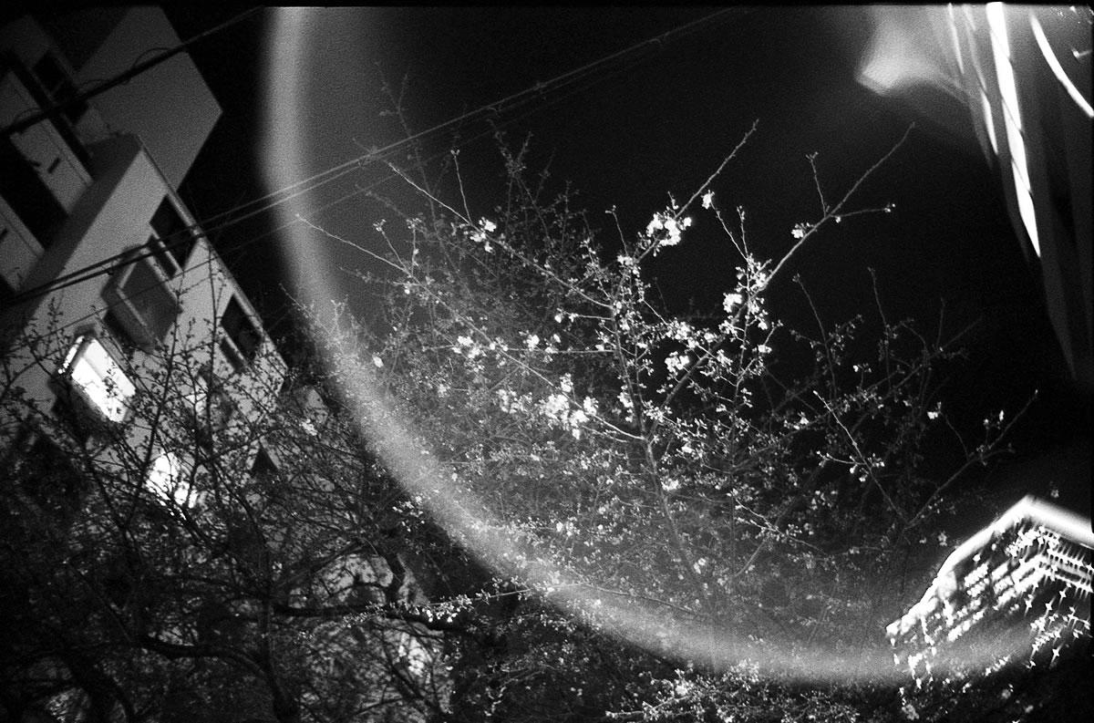 桜丘に桜が咲き始める頃 Leica M3 + Summilux 35mm f1.4 + KODAK PROFESSIONAL TRI-X